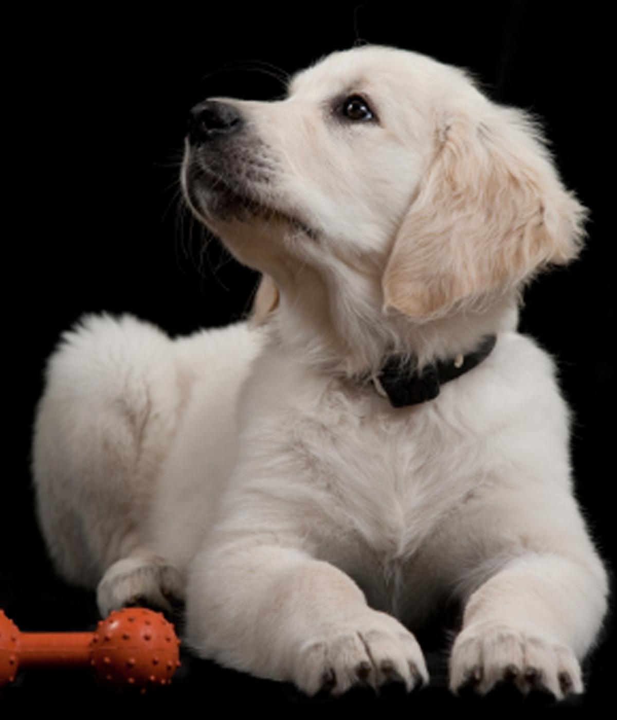 puppy training at port douglas puppy school